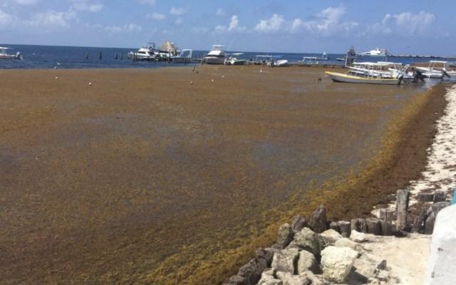 Preparan llegada de sargazo a Quintana Roo - Foto de @SIPSENOTICIAS