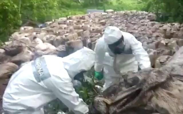 #Video Semar halla más de 50 toneladas de cristal en Sinaloa - Captura de pantalla