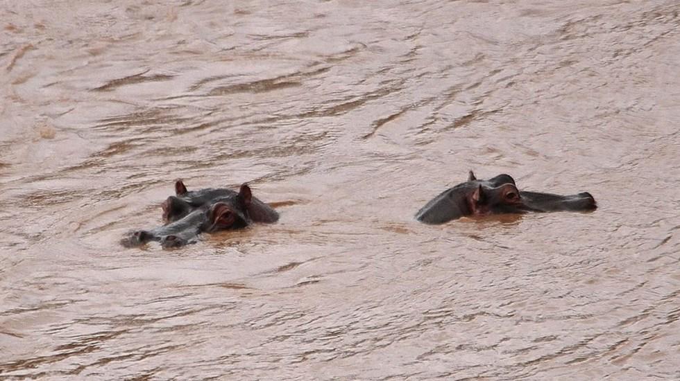 Turista chino muere por ataque de hipopótamo en Kenia - Foto de Kenya Wildlife Service