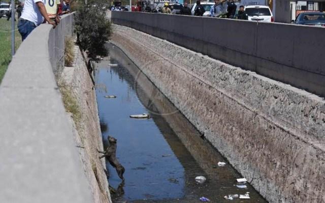 Bomberos rescatan a Pitbull en canal de aguas de Ciudad Juárez - Foto de Rey Jauregui