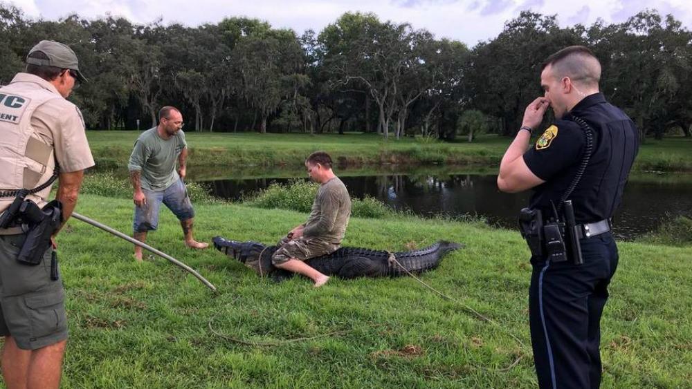 Caimán ataca a hombre en Florida - Foto de @myclearwaterPD