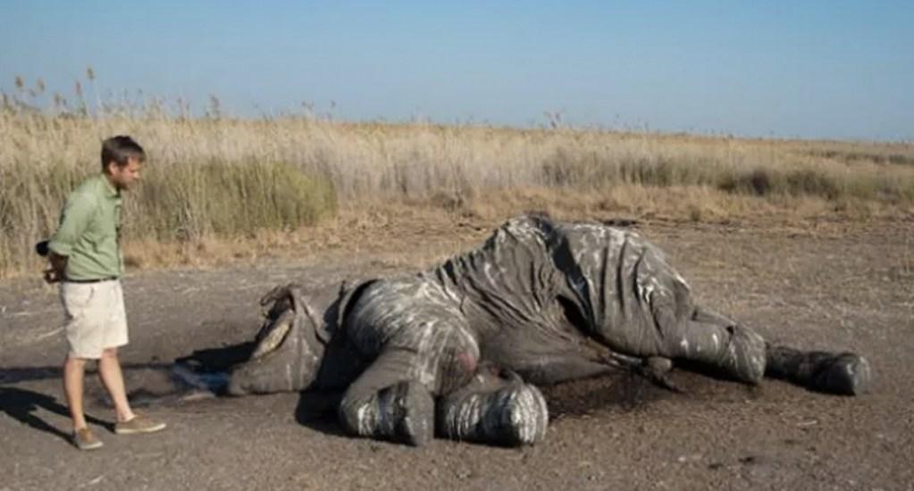 Encuentran 87 elefantes víctimas de caza furtiva en Botsuana - Foto de Elephants whitout borders