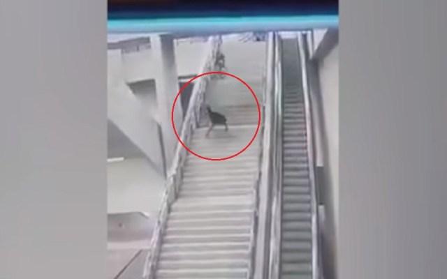 #Video Joven cae de escaleras del Metro al huir de policías - Foto Captura de Pantalla