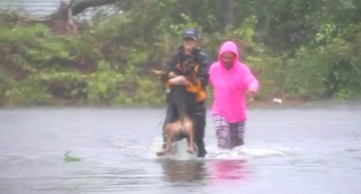 El conmovedor rescate de seis perros encerrados en una jaula inundada