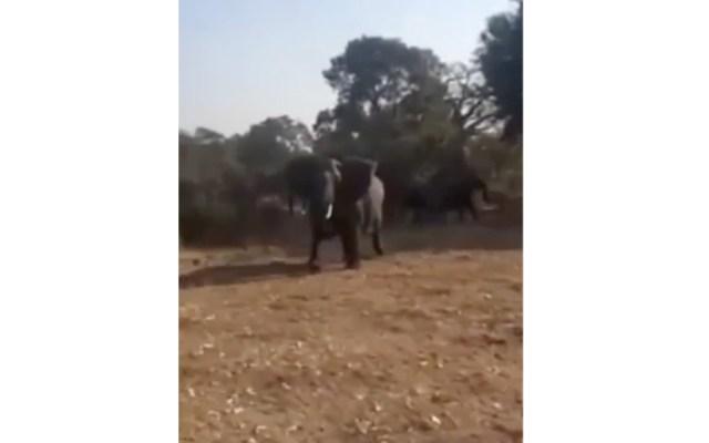 #Video Elefante adulto ataca a turistas en Sudáfrica - #Video Elefante adulto ataca a turistas en Sudáfrica