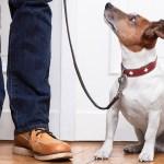 Estudio comprueba que perros entienden algunas palabras - Estudio prueba que perros sí pueden asociar palabras a objetos. Foto de Internet