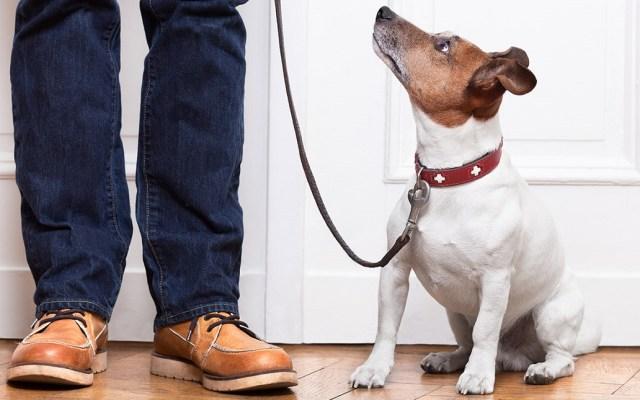 Perros pueden identificar ataques de hipoglucemia en sus dueños - Estudio prueba que perros sí pueden asociar palabras a objetos. Foto de Internet