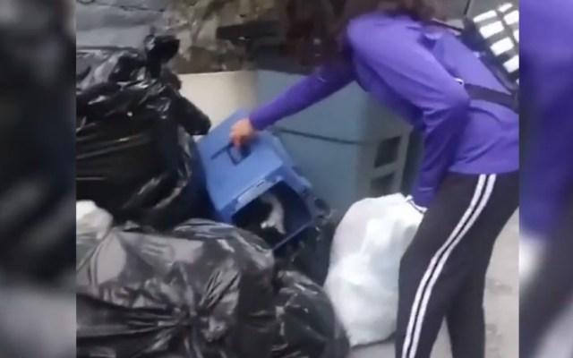 #Video Rescatan a gato abandonado entre basura en Nueva York - Captura de pantalla