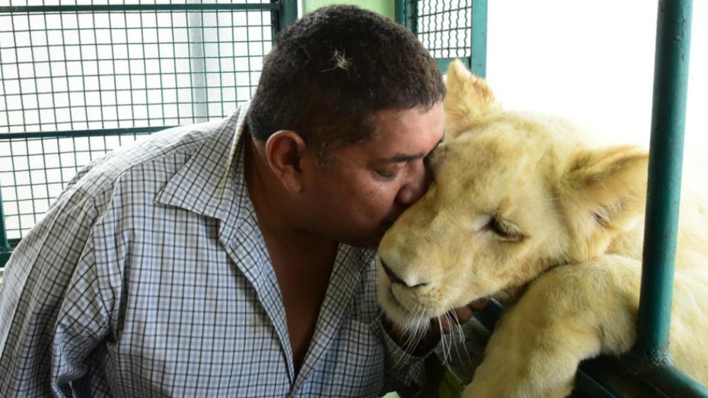 Profepa turna a PGR caso de los leones en azotea de Iztacalco - Foto de Cuartoscuro