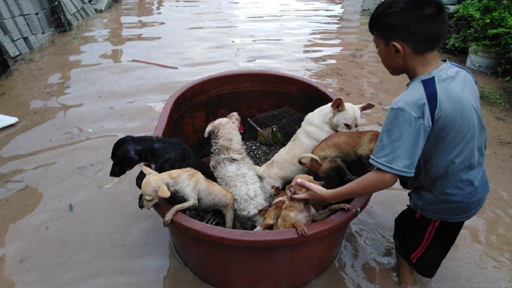 Los perros rescatados por Jostyn son callejeros. Foto de Francisco Barrera García