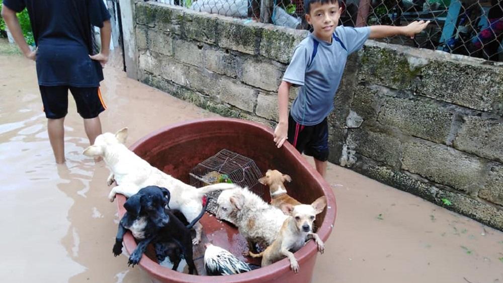 Niño rescata perros y aves de inundación en Nayarit - Jostyn Dilan rescató cinco perros y dos aves de inundaciones en Nayarit. Foto de Francisco Barrera García