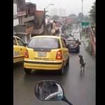 #Video Perro corre detrás de dueños que lo abandonaron