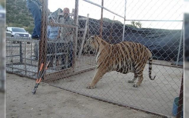 Profepa decomisa animales exóticos en Sonora - Foto de Profepa
