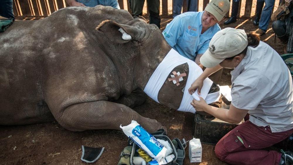 China legaliza comercio de productos a base de tigre o rinoceronte - Foto de MUJAHID SAFODIEN / AFP