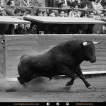 Tunden a legisladora por comentarios erróneos sobre los toros - Foto de la Plaza México.