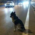 #Video Perro fiel espera en el lugar donde su dueña fue asesinada - Foto de China News