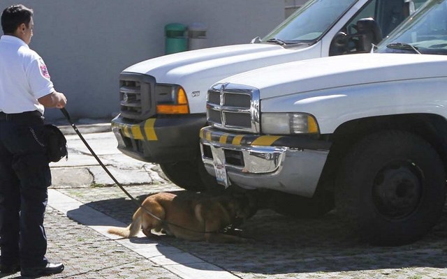 INE jubilará a dos perros de su Unidad Canina - El INE llama al binomio canino