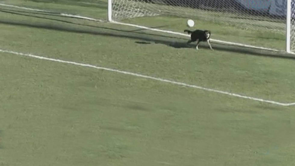 Un perrito evitó un gol en un partido del ascenso argentino
