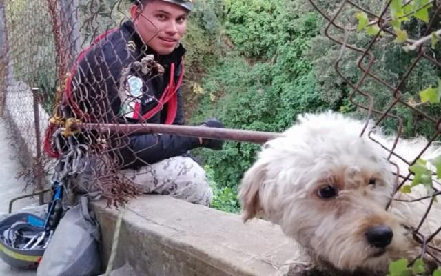 Salvan a perro del fondo de una barranca en la Ciudad de México - El perro llevaba seis días al fondo de la barranca. Foto de @SSP_CDMX