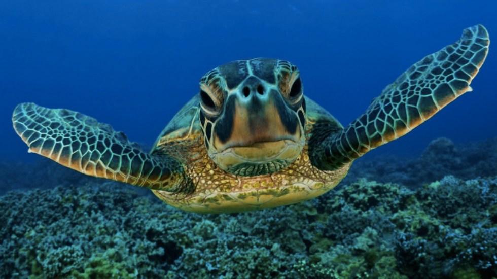 Todas las especies de tortugas están contaminadas con plástico - Foto de Tortugas Wiki