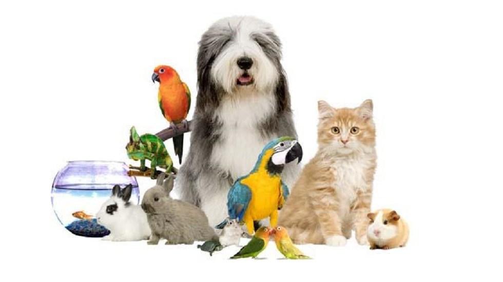 Lo que debes saber antes de tener una mascota - Animales de compañía. Foto de Internet