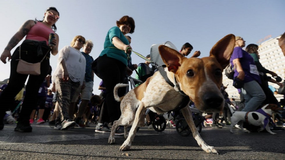 Organizan carrera con perros en favor de refugio animal de Texas - Carrera con perros. Foto de EFE