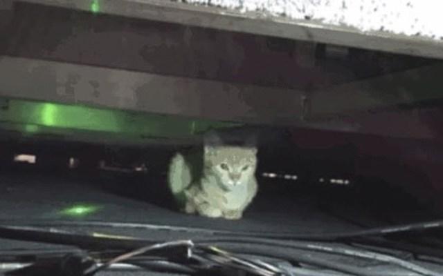 #Video Encuentran un gato debajo de escenario de la conferencia matutina - Foto de Twitter