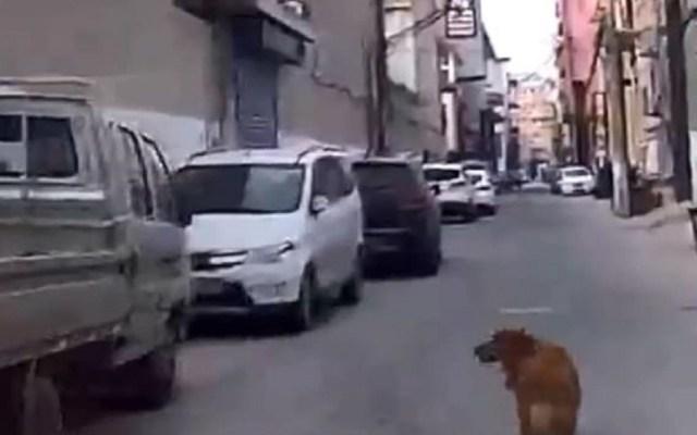 #Video Perro guía a ambulancia hasta su dueño inconsciente - Perro guiando a ambulancia. Captura de pantalla