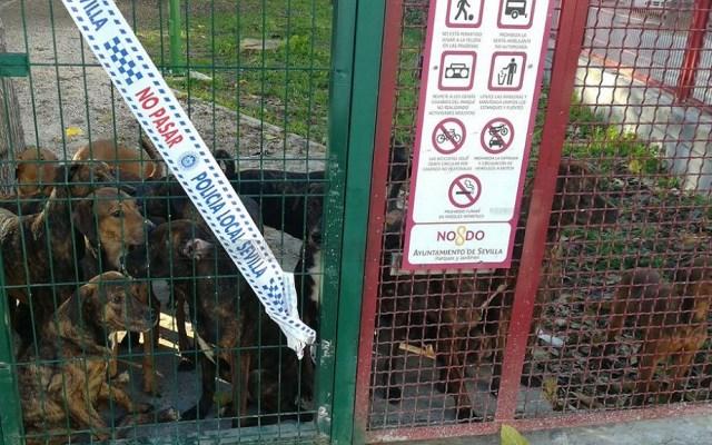 #Video Abandonan a 18 perros en parque infantil de Sevilla - Perros abandonados en Sevilla, España. Foto de @EmergenciasSev