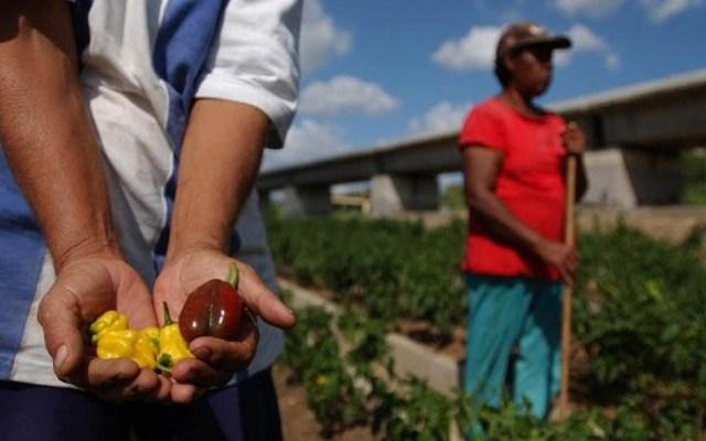 FAO lanza grito de alarma por pérdida de biodiversidad - La FAO se pronuncia por favorecer la agricultura urbana. Foto de FAO