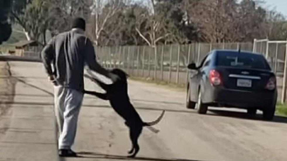 Hombre empuja, golpea y abandona a su perro en carretera