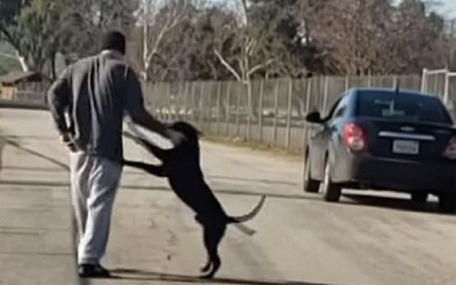 #Video Juega con perro para después abandonarlo - Hombre alejando al perro de sí para irse. Captura de pantalla