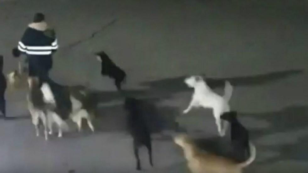 Muerte de mujer en Tecámac fue por ataque de perros - Foto de captura de pantalla