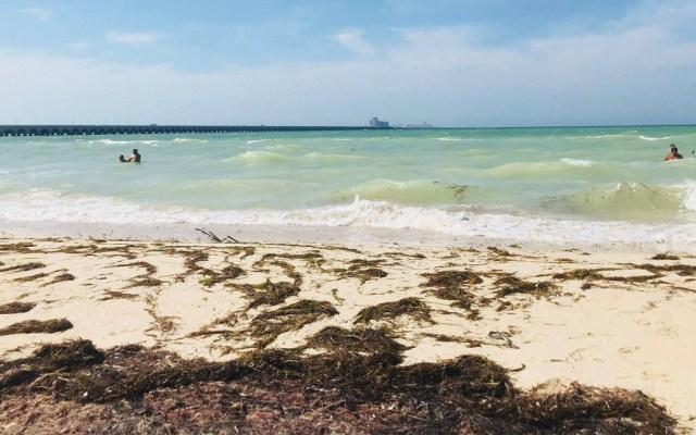 Preparan estrategia para combatir presencia de sargazo en playas mexicanas - Foto de Tania Villanueva/ López-Dóriga Digital