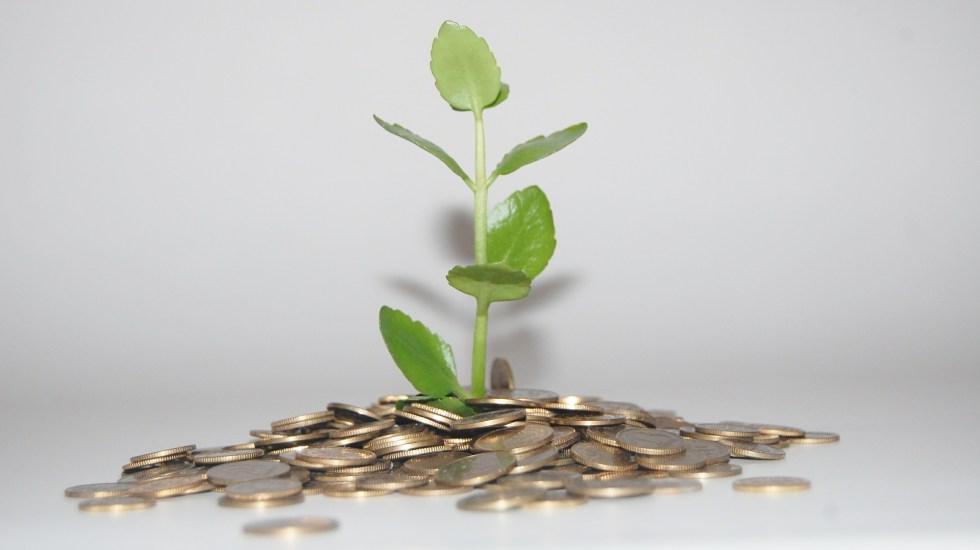 Buscan proyectos de economía verde - Foto de Pixabay.