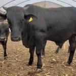 Exportación de carne podría aumentar 15 por ciento en 2019: IP - Foto de Juan Pablo Carreto/López-Dóriga Digital