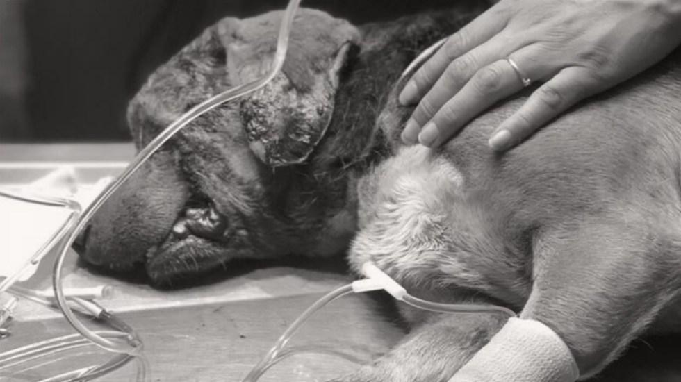 Muere Miky, el perro al que le sacaron los ojos en Puebla - Foto de TAC