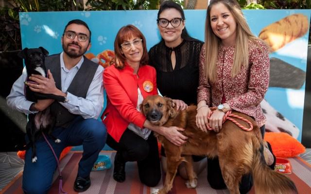 Personas que ayudan a perros y perros que ayudan a personas - Foto de Pabellón Huellitas.