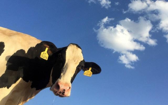 Irresponsable culpar a industria lechera por problema de agua en Coahuila: legislador - Foto de Ryan Song para Unsplash