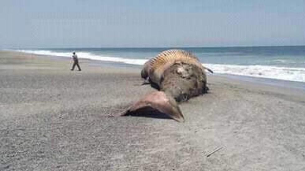 Ballena aparece muerta en costas de Oaxaca - Ballena aparece muerta playa Oaxaca