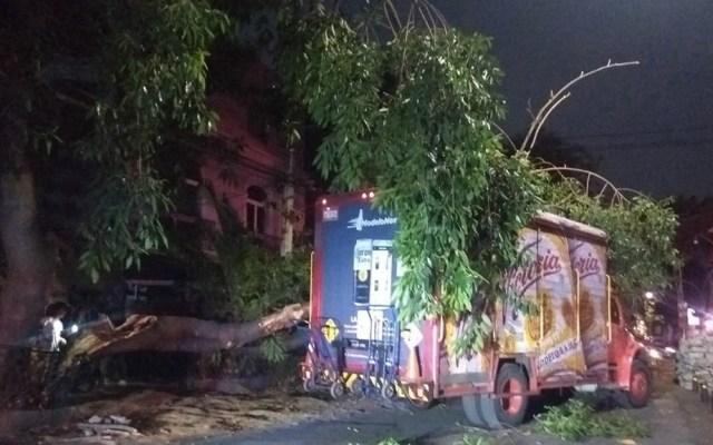 Camión de cerveza tira árbol en la Roma Norte - Foto de Quadratín