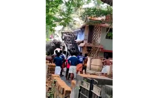 #Video Elefante escapa y causa destrozos en India - Captura de pantalla