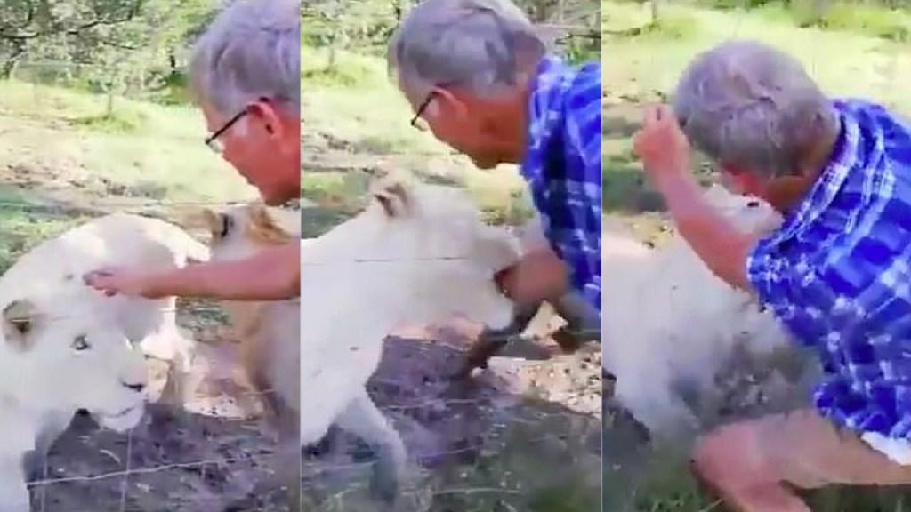 #Video Leona muerde brazo a hombre en reserva de Sudáfrica - Leona muerde a hombre en reserva de Sudáfrica. Captura de pantalla