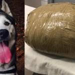 Guardería entrega a dueña el cadáver embolsado de su perra