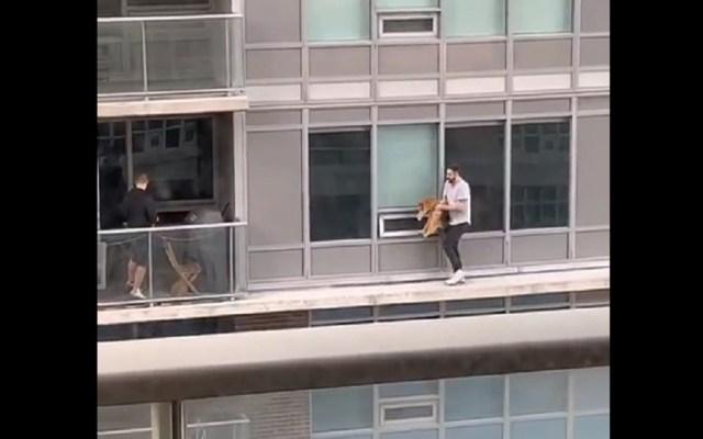 #Video Hombre camina por cornisa de edificio para salvar a su gato - El hombre atravesó la cornisa que separa los balcones de los edificios para traer de vuelta a casa a su gato. Captura de pantalla