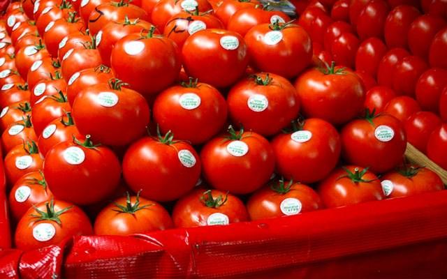SE respaldará a productores de tomate en negociación con EE.UU. - El gobierno de EE.UU. impondrá un arancel del 17.5 por ciento al tomate mexicano. Foto de El Siglo de Torreón