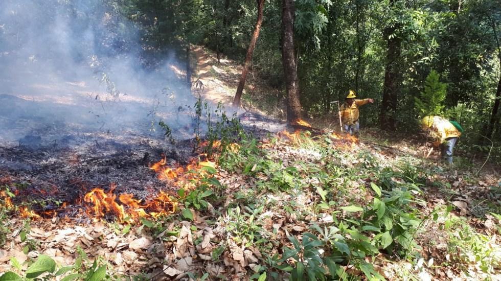 Google habilita alertas SOS por incendios forestales en México - Foto de Notimex.