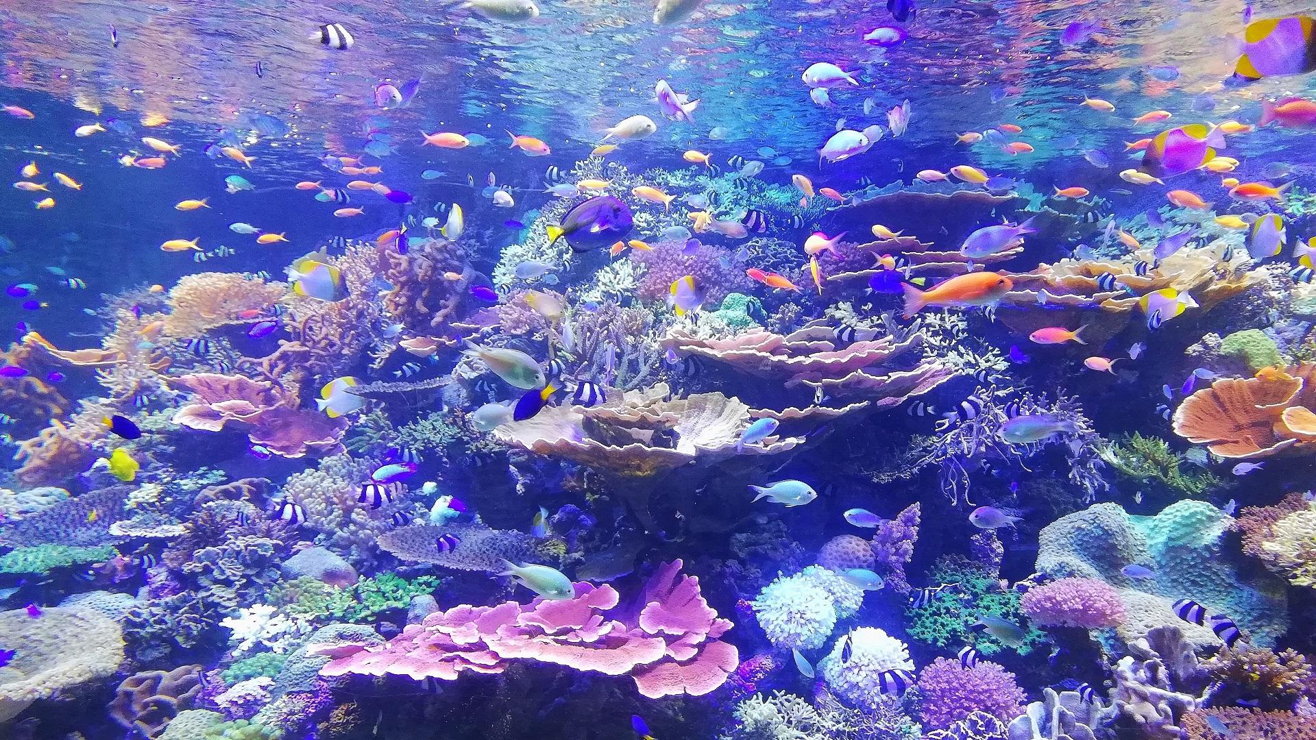 Arrecife de coral. Foto de SGR / Unsplash