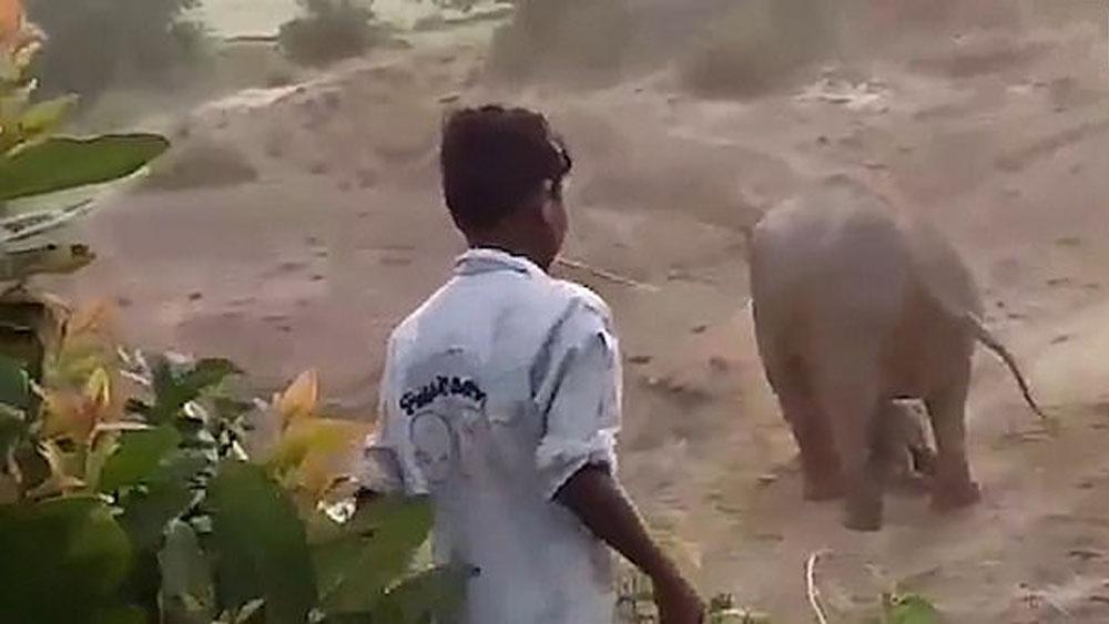 #Video Elefante mata a hombre tras apedrear a su cría - elefante cría india