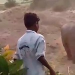 #Video Elefante mata a hombre tras apedrear a su cría